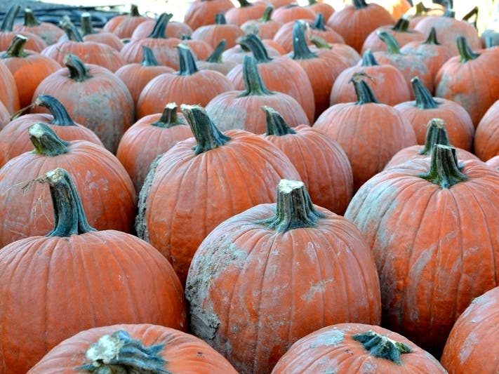 Gloucester Township Halloween 2020 Gloucester Township Area Pumpkin Patches Are Open Amid Pandemic