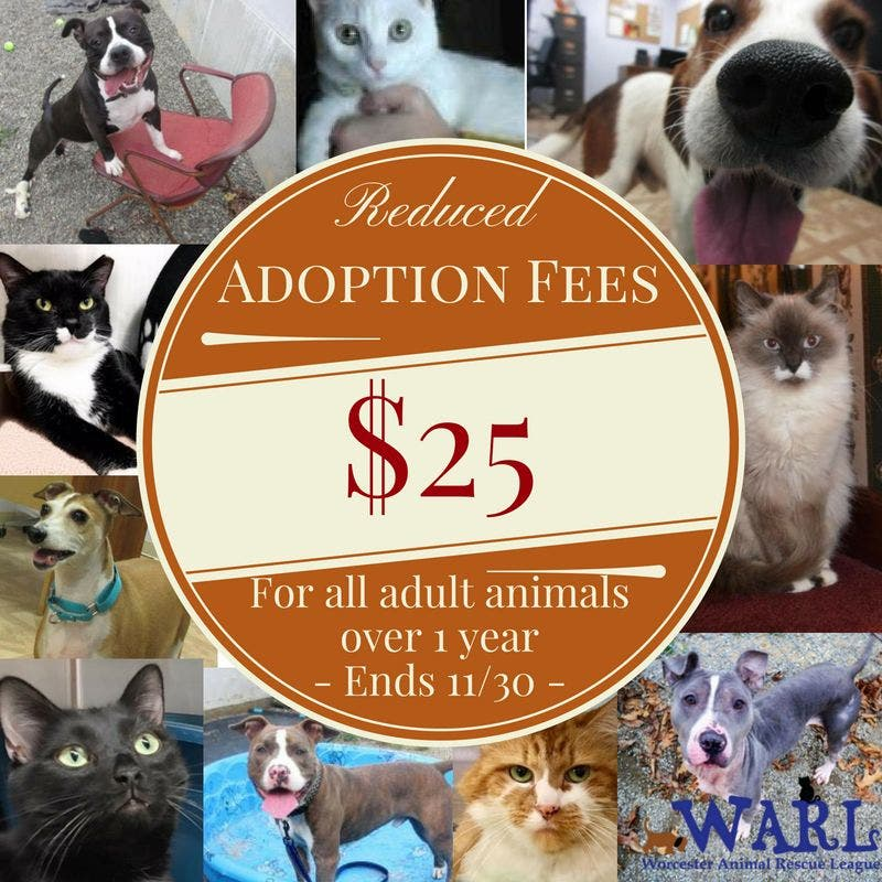 Adoptions Are On Bigtime At Worcester Animal Rescue League Worcester Ma Patch