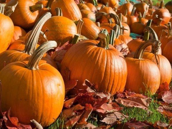 9 Pumpkin Patches To Visit Near Loudoun Ashburn Va Patch