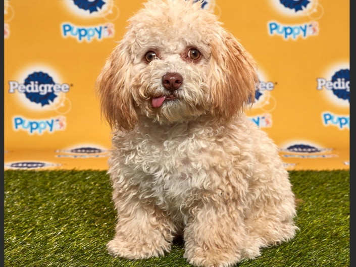 Puppy Bowl Xvi California Shelter Pups Featured On Animal