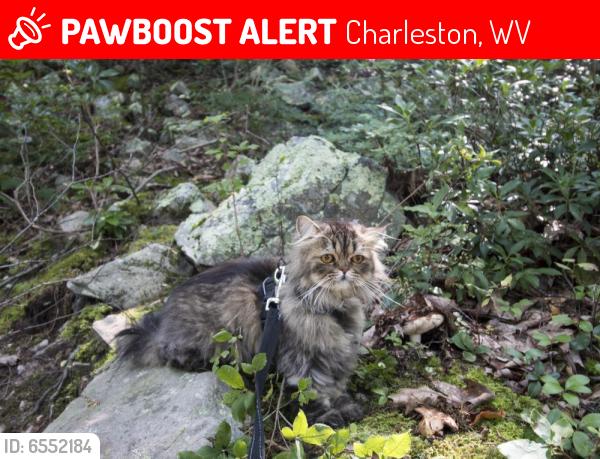 Charleston Neighbor Posts Charleston Wv Patch