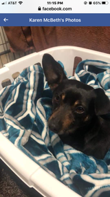 Found Dog small Male mixed breed, not fixed. Found 2/22/21 at...